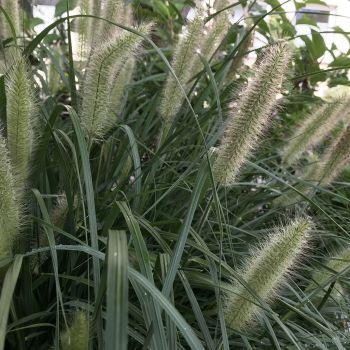 trawy-1-13