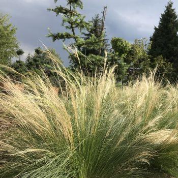 trawy-1-9